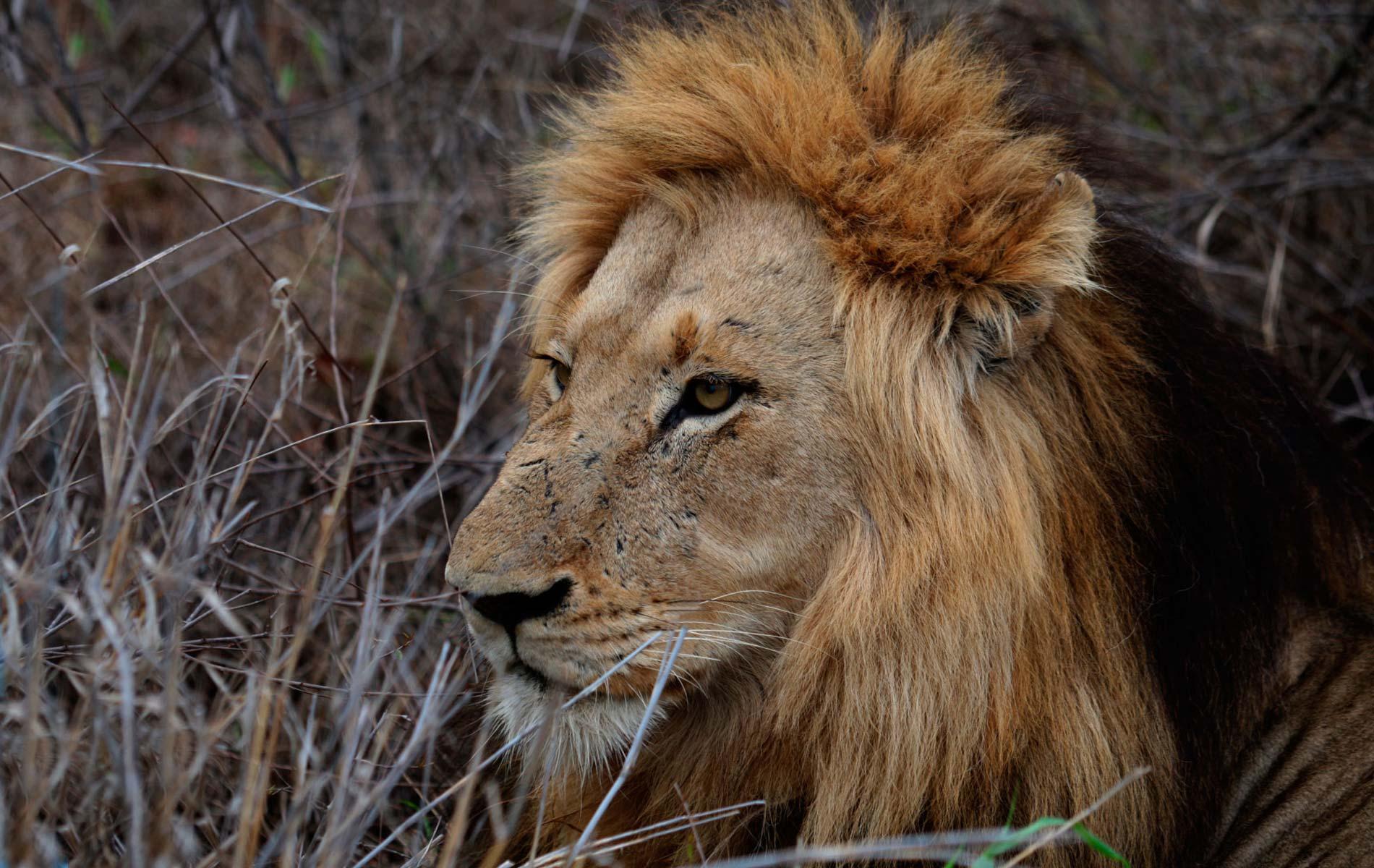 SOUTHAFRICA - SABI-SABI_EARTH LODGE - KRUGER PARK - © Graziano Villa