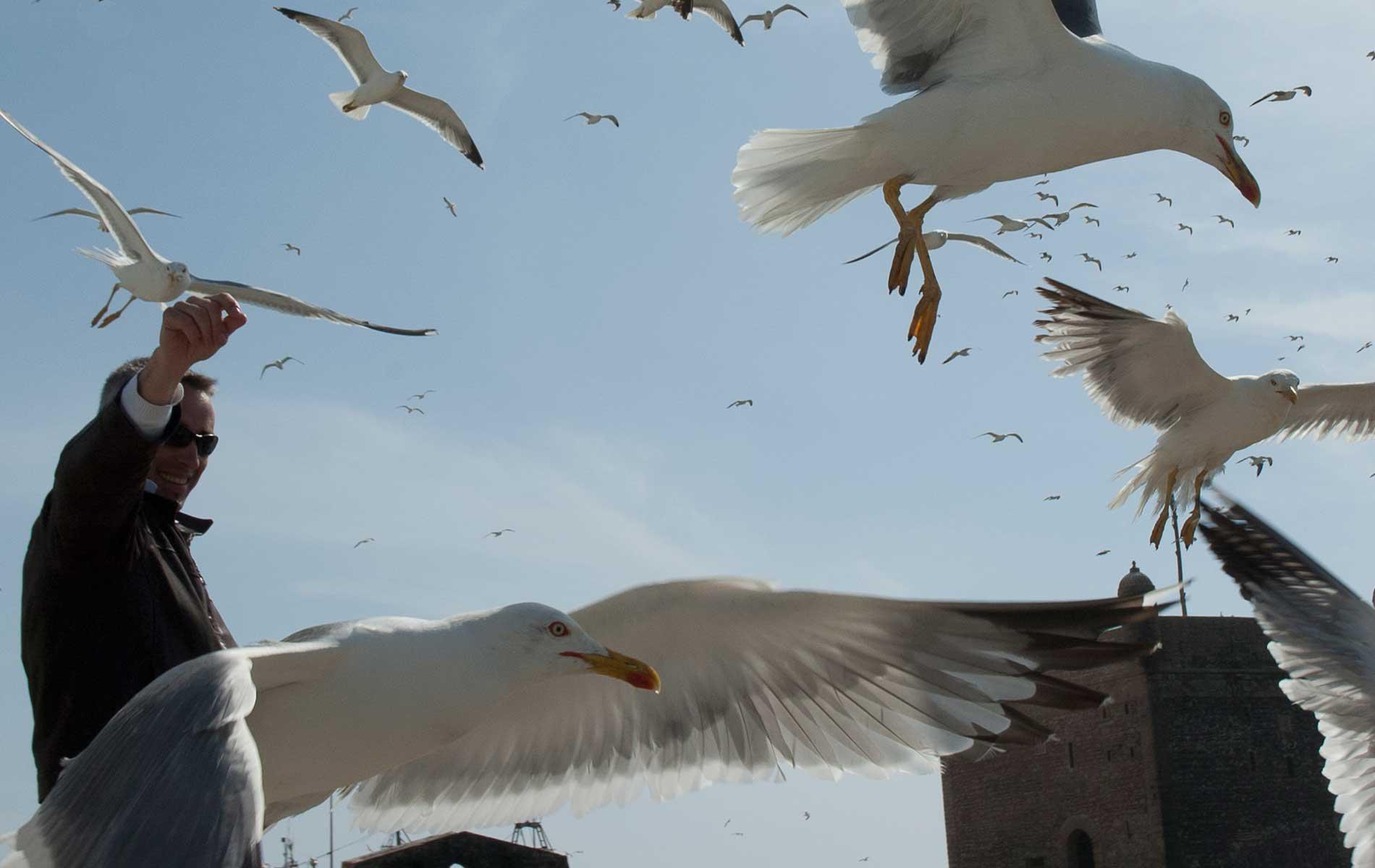 MOROCCO - Essaouira - A Big Hug from a Seagull - © Graziano Villa