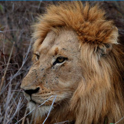 AFRICAN – Wild Life